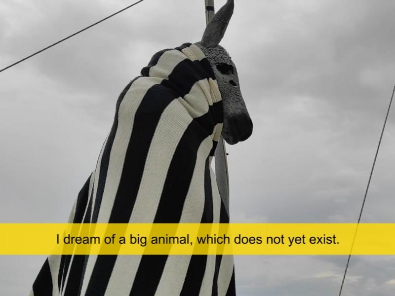 Donkey Dream